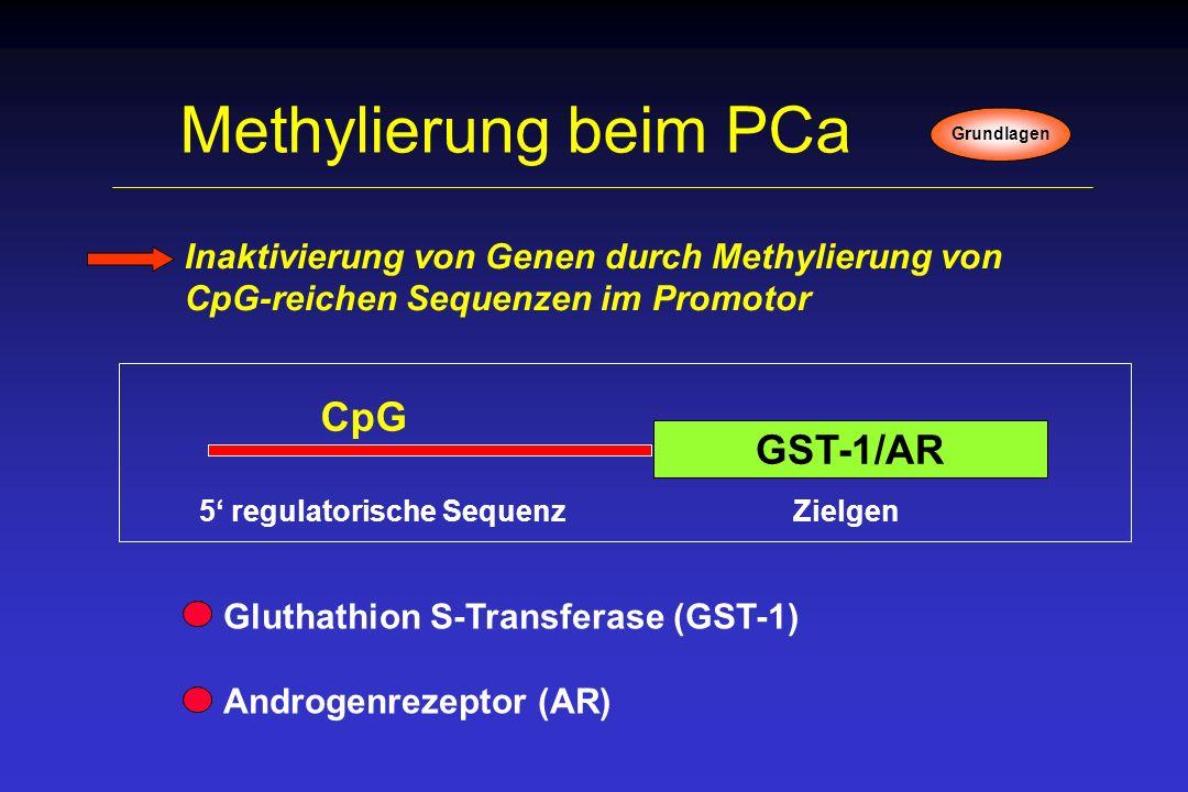 Methylierung beim PCa CpG GST-1/AR