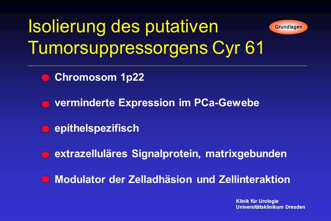 Isolierung des putativen Tumorsuppressorgens Cyr 61