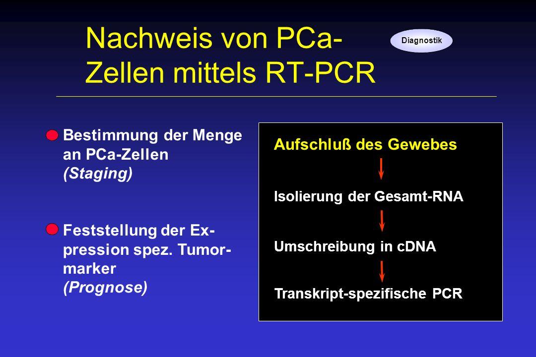 Nachweis von PCa- Zellen mittels RT-PCR