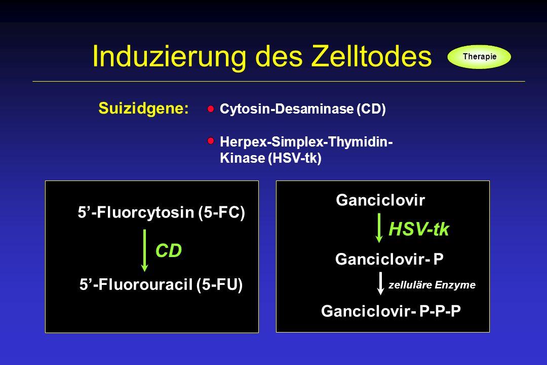 Induzierung des Zelltodes