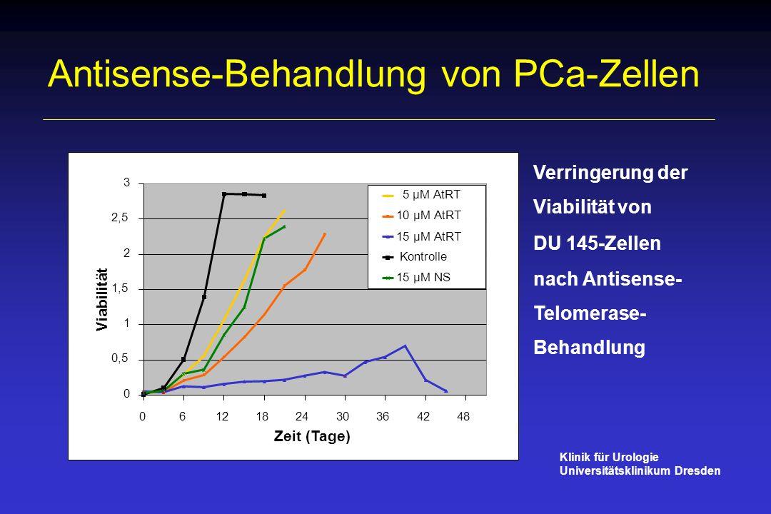 Antisense-Behandlung von PCa-Zellen