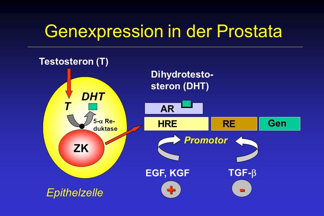 Genexpression in der Prostata