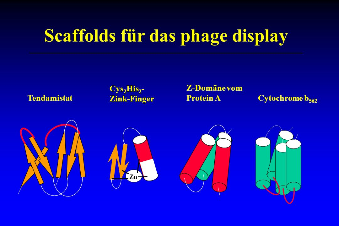 Scaffolds für das phage display