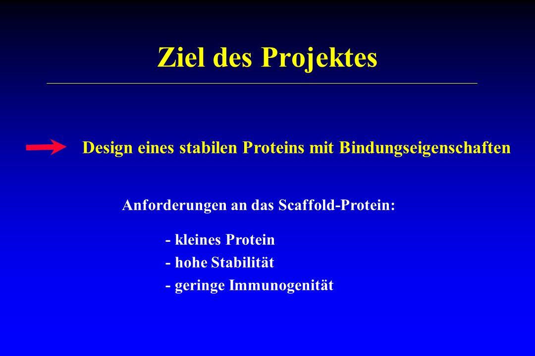 Ziel des Projektes Design eines stabilen Proteins mit Bindungseigenschaften. Anforderungen an das Scaffold-Protein: