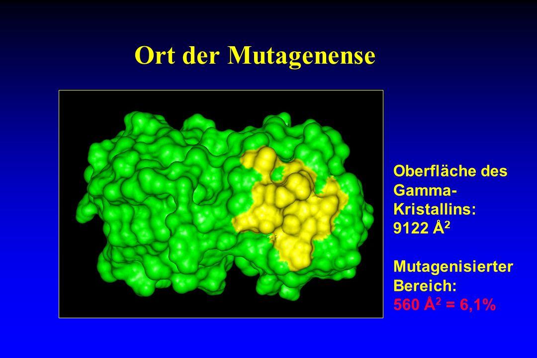 Ort der Mutagenense Oberfläche des Gamma-Kristallins: 9122 Å2