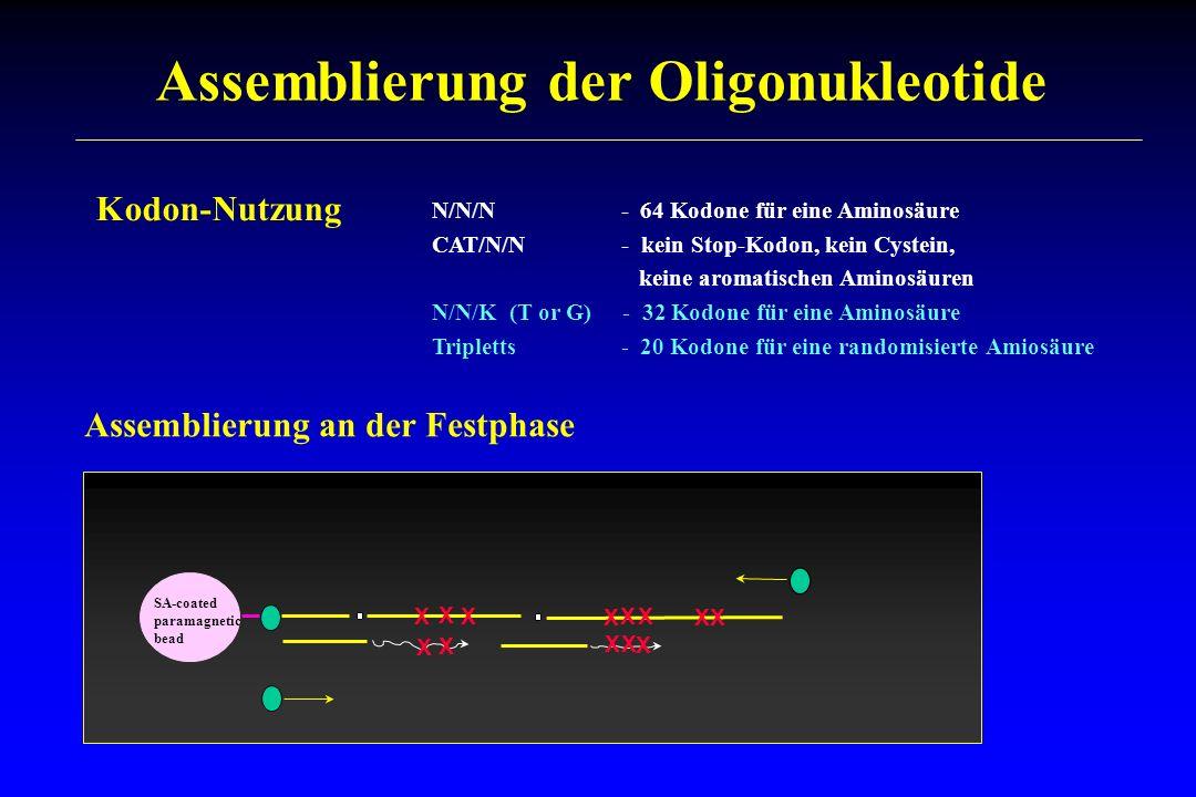 Assemblierung der Oligonukleotide