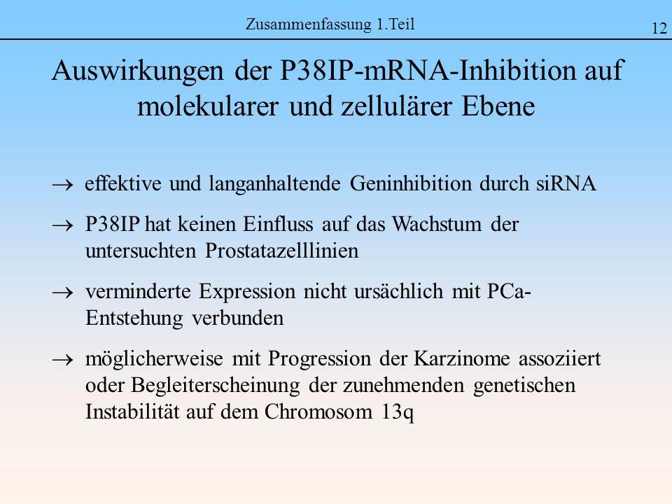 Zusammenfassung 1.Teil 12. Auswirkungen der P38IP-mRNA-Inhibition auf molekularer und zellulärer Ebene.