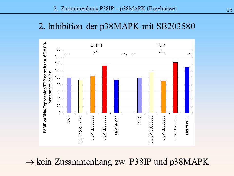 2. Zusammenhang P38IP – p38MAPK (Ergebnisse)
