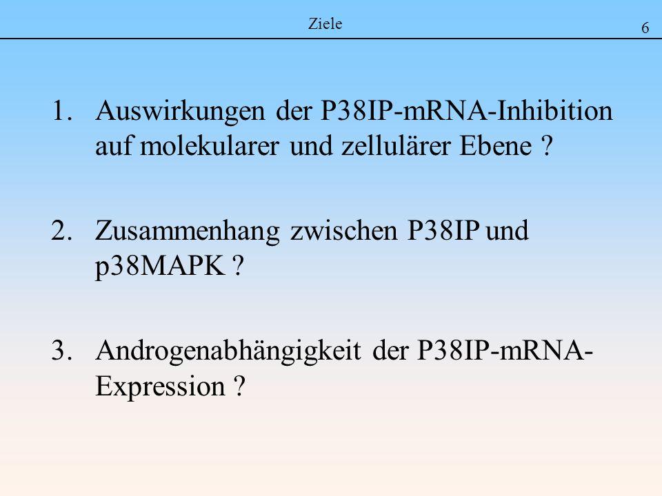 Zusammenhang zwischen P38IP und p38MAPK