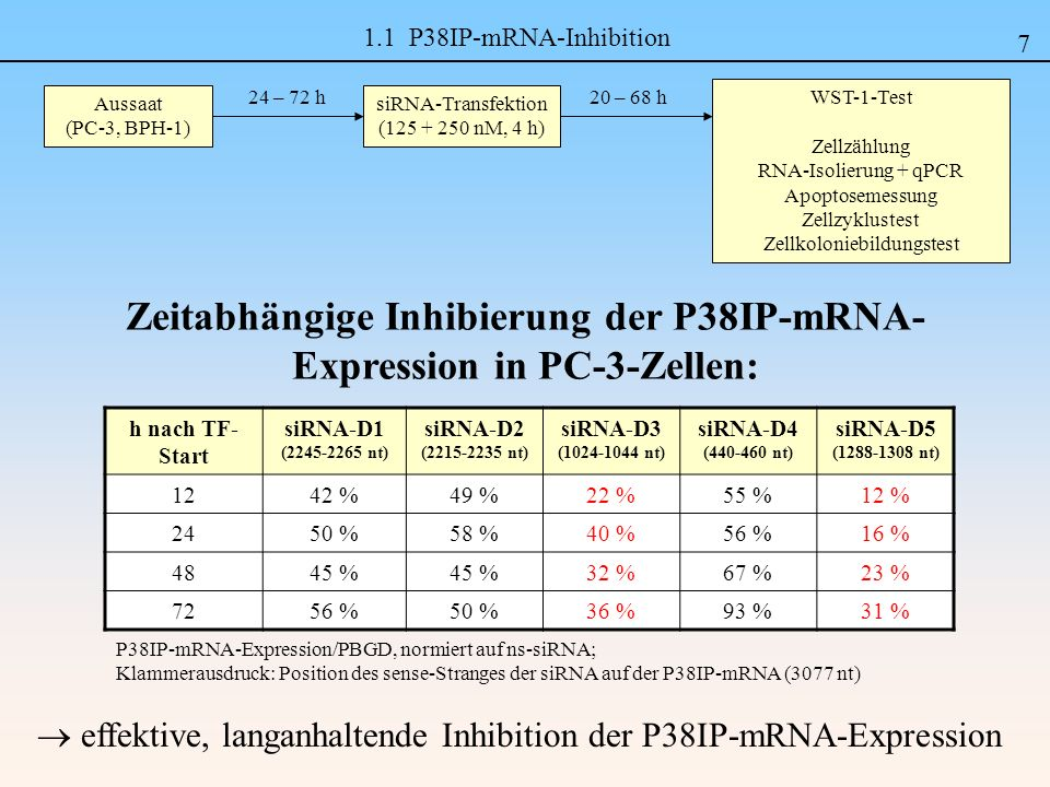 Zeitabhängige Inhibierung der P38IP-mRNA-Expression in PC-3-Zellen: