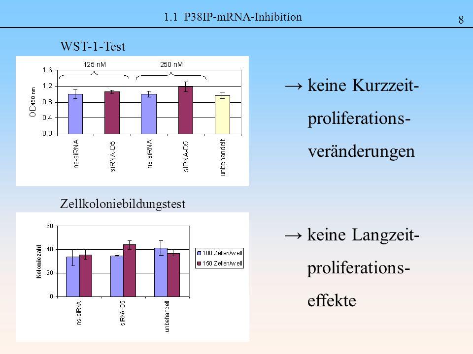 → keine Kurzzeit- proliferations- veränderungen → keine Langzeit-