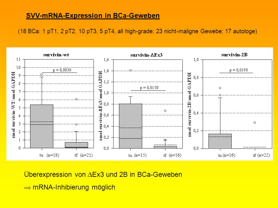 SVV-mRNA-Expression in BCa-Geweben