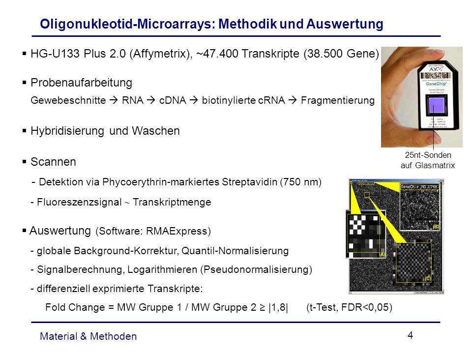 Oligonukleotid-Microarrays: Methodik und Auswertung
