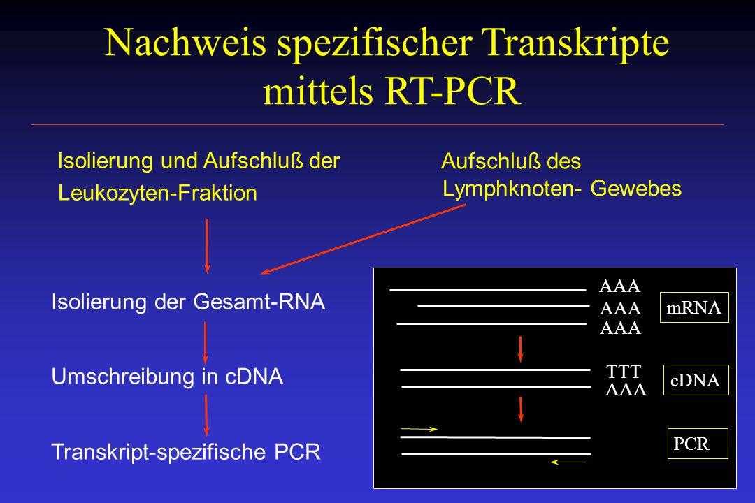Nachweis spezifischer Transkripte