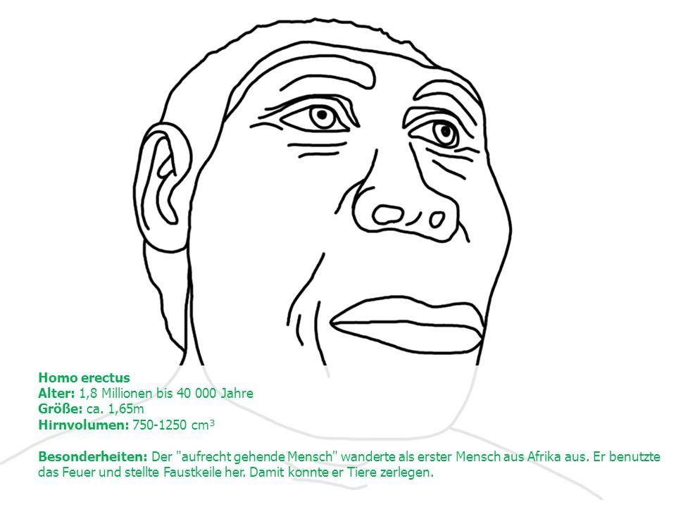 Homo erectus Alter: 1,8 Millionen bis 40 000 Jahre Größe: ca