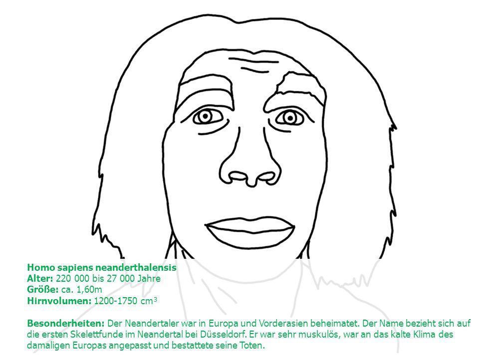 Homo sapiens neanderthalensis Alter: 220 000 bis 27 000 Jahre Größe: ca.