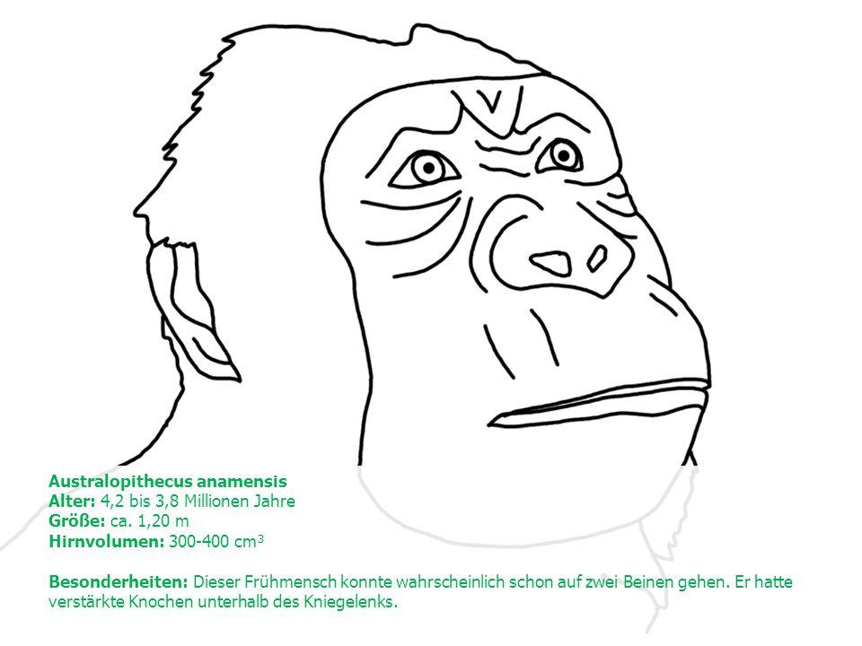 Australopithecus anamensis Alter: 4,2 bis 3,8 Millionen Jahre Größe: ca.