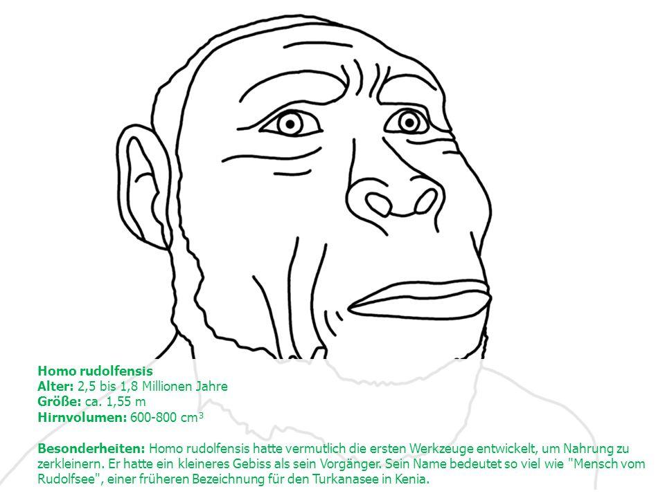 Homo rudolfensis Alter: 2,5 bis 1,8 Millionen Jahre Größe: ca