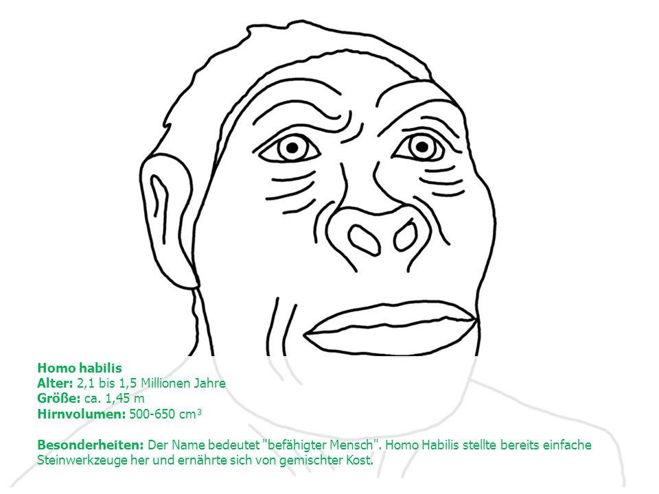 Homo habilis Alter: 2,1 bis 1,5 Millionen Jahre Größe: ca