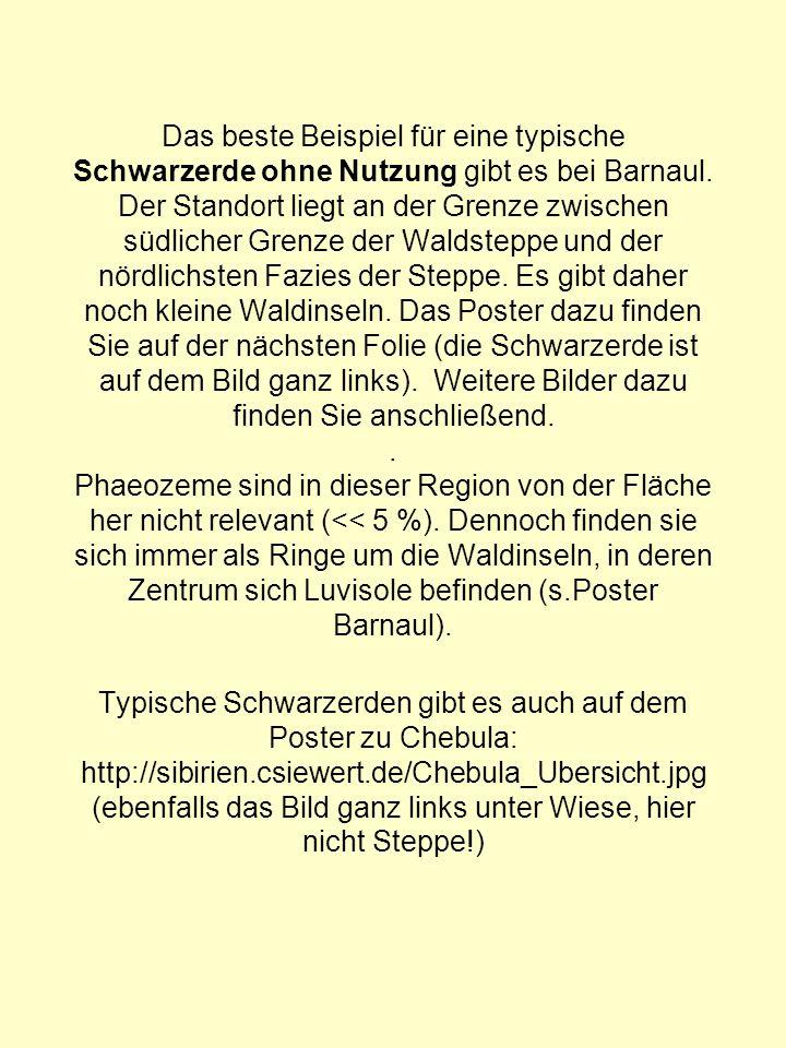 Das beste Beispiel für eine typische Schwarzerde ohne Nutzung gibt es bei Barnaul.
