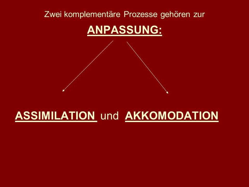 Zwei komplementäre Prozesse gehören zur ANPASSUNG: