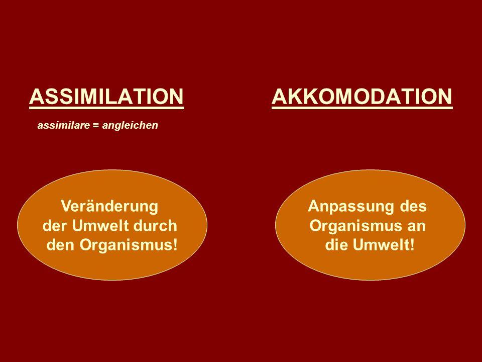 ASSIMILATION AKKOMODATION