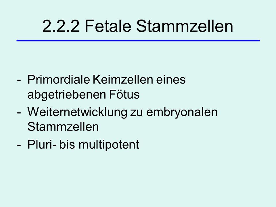 2.2.2 Fetale Stammzellen Primordiale Keimzellen eines abgetriebenen Fötus. Weiternetwicklung zu embryonalen Stammzellen.