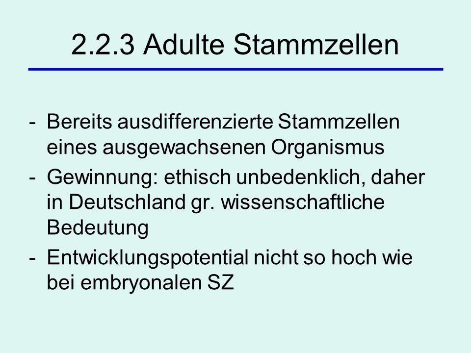2.2.3 Adulte Stammzellen Bereits ausdifferenzierte Stammzellen eines ausgewachsenen Organismus.