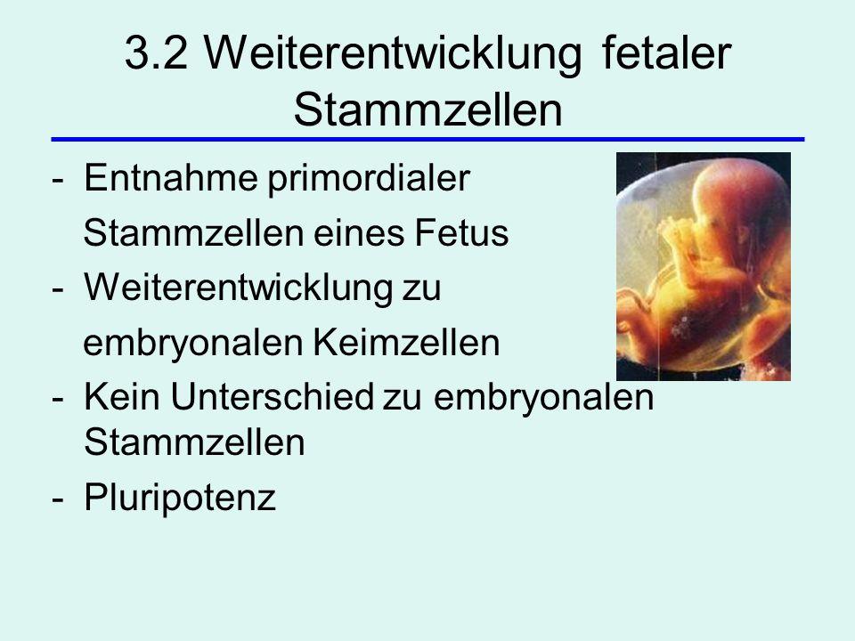 3.2 Weiterentwicklung fetaler Stammzellen