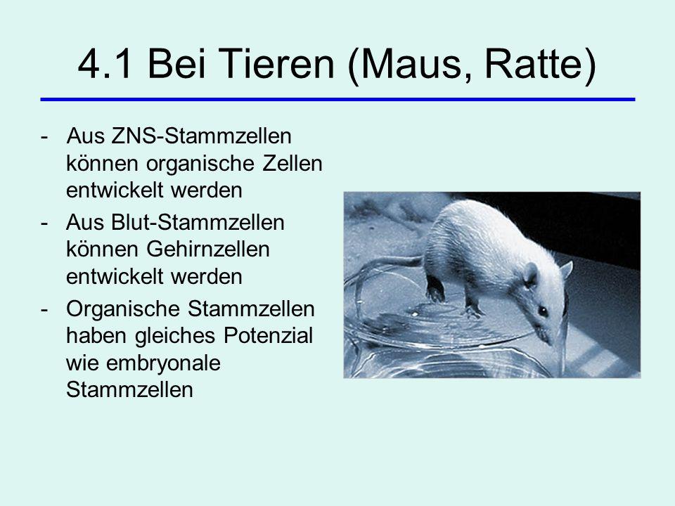 4.1 Bei Tieren (Maus, Ratte)