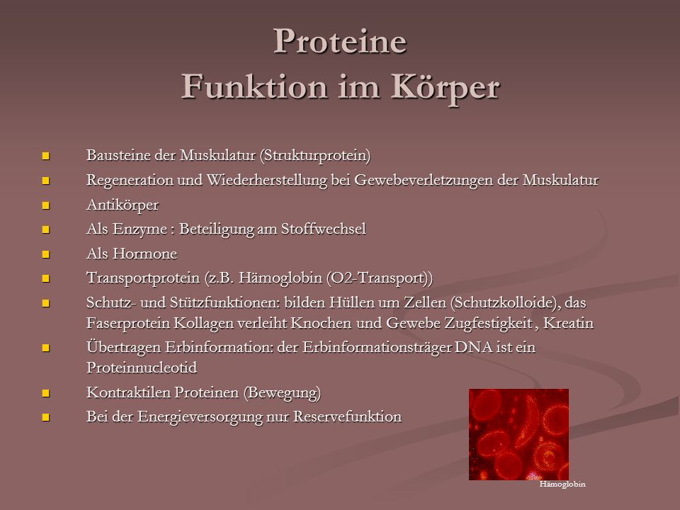 Proteine Funktion im Körper