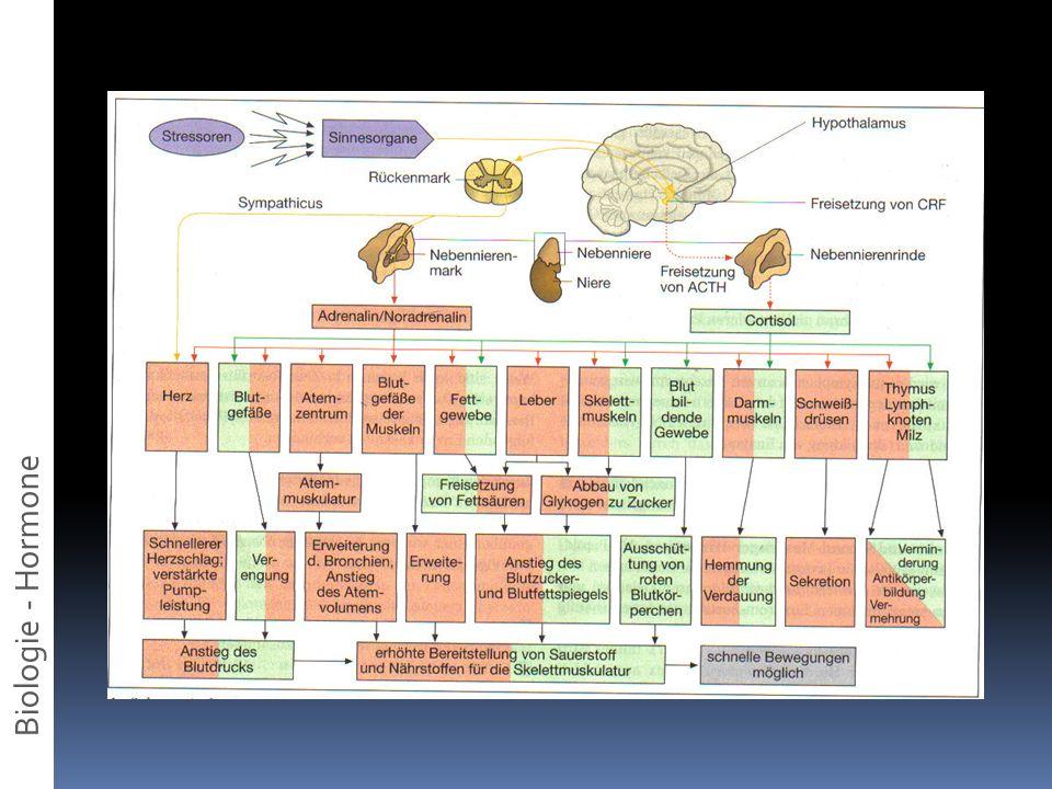 Biologie - Hormone