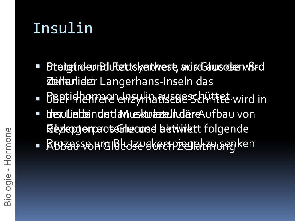 Insulin Protein- und Fettsynthese aus Glucose wird stimuliert