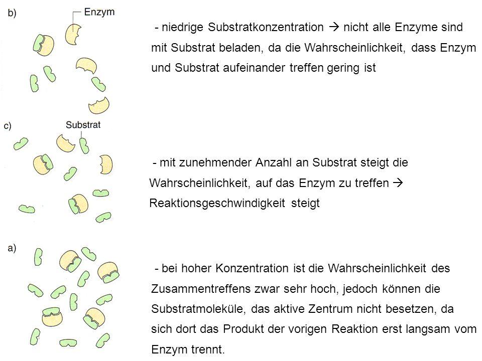 - niedrige Substratkonzentration  nicht alle Enzyme sind mit Substrat beladen, da die Wahrscheinlichkeit, dass Enzym und Substrat aufeinander treffen gering ist