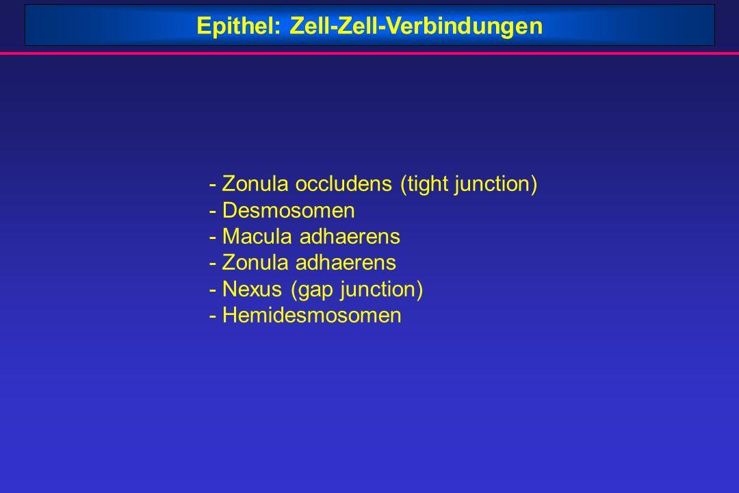 Epithel: Zell-Zell-Verbindungen