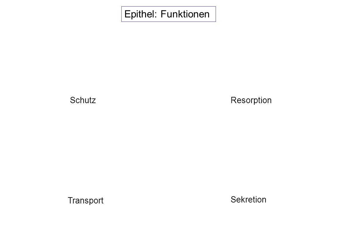 Epithel: Funktionen Schutz Resorption Transport Sekretion