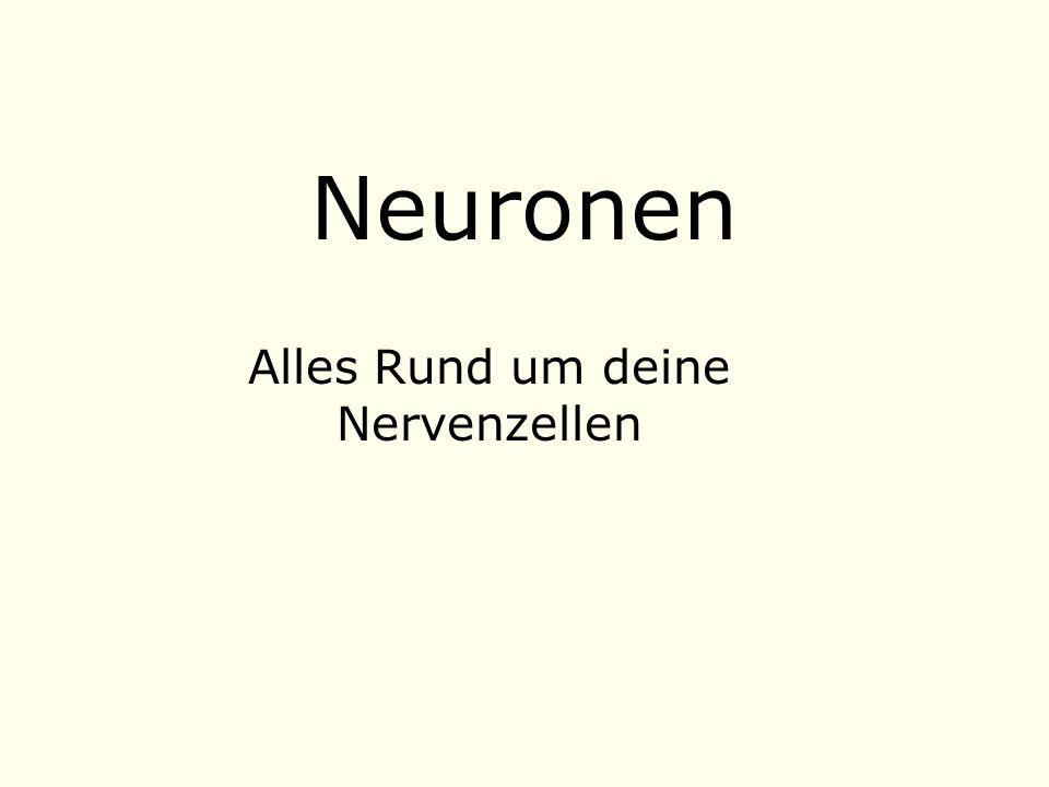 Alles Rund um deine Nervenzellen