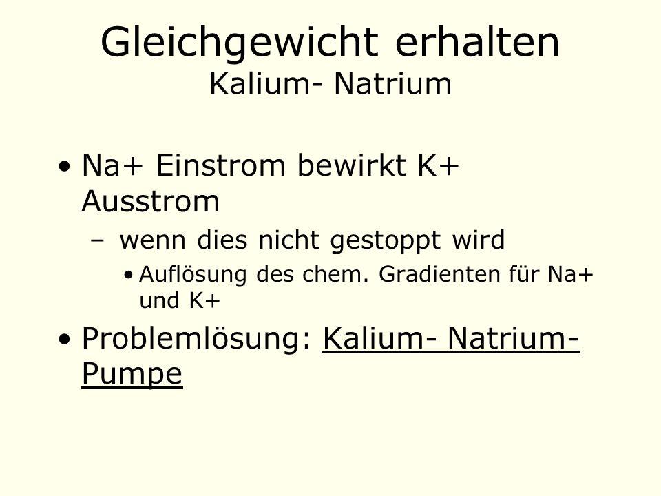 Gleichgewicht erhalten Kalium- Natrium