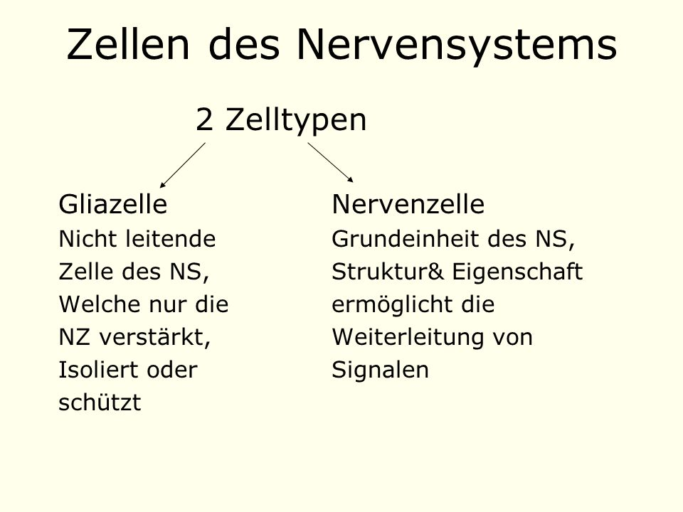 Zellen des Nervensystems