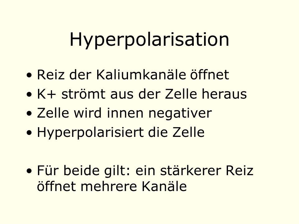 Hyperpolarisation Reiz der Kaliumkanäle öffnet