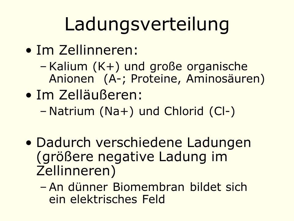 Ladungsverteilung Im Zellinneren: Im Zelläußeren: