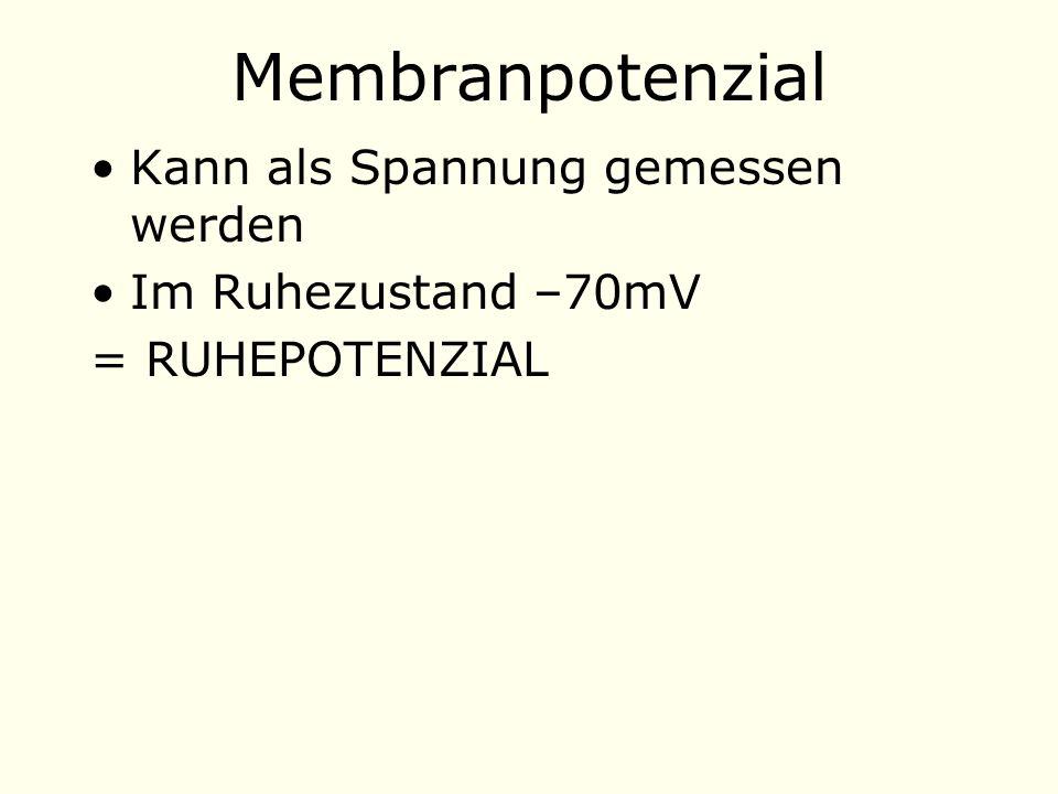 Membranpotenzial Kann als Spannung gemessen werden