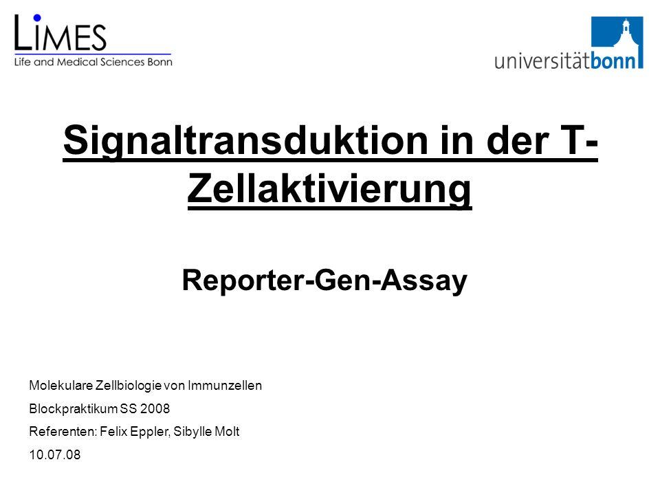 Signaltransduktion in der T-Zellaktivierung
