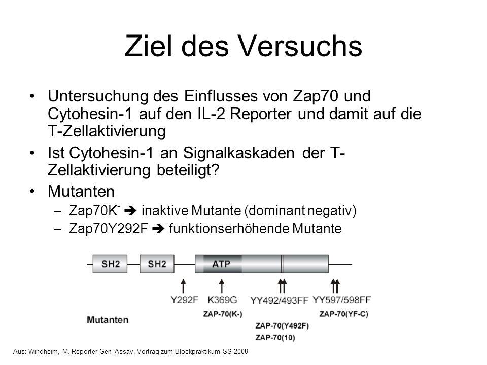 Ziel des Versuchs Untersuchung des Einflusses von Zap70 und Cytohesin-1 auf den IL-2 Reporter und damit auf die T-Zellaktivierung.