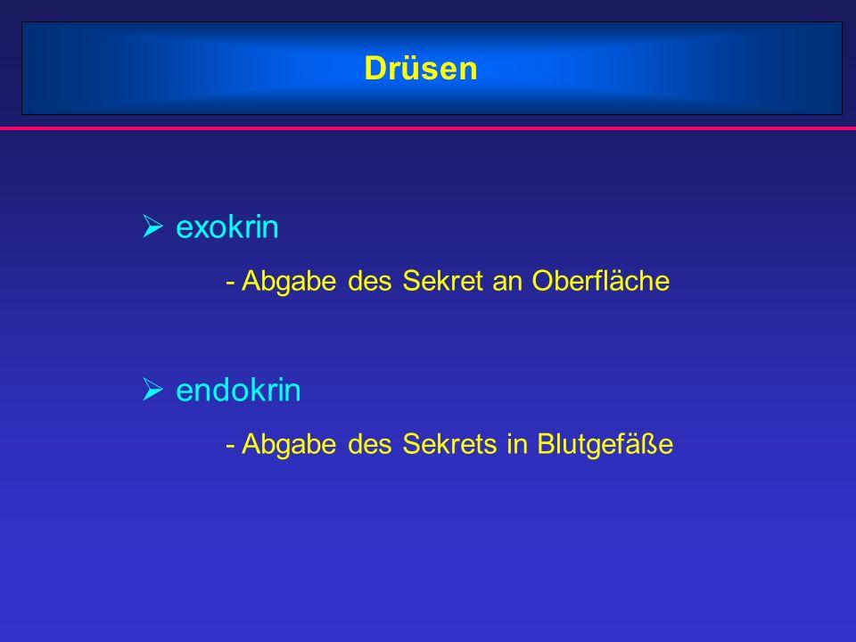 Drüsen exokrin endokrin - Abgabe des Sekret an Oberfläche