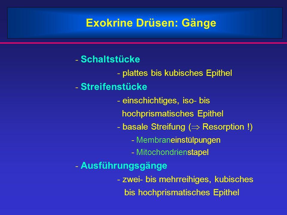 Ausgezeichnet Anatomie Der Drüsen Ideen - Anatomie und Physiologie ...