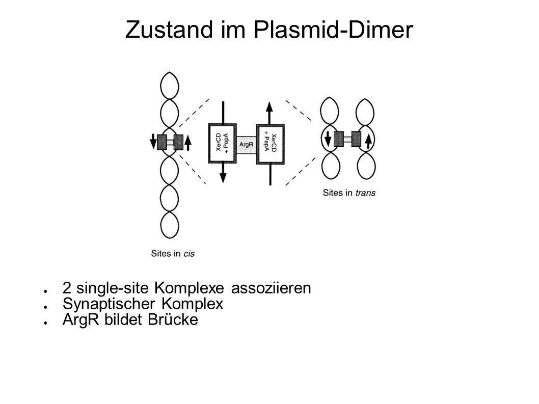 Zustand im Plasmid-Dimer