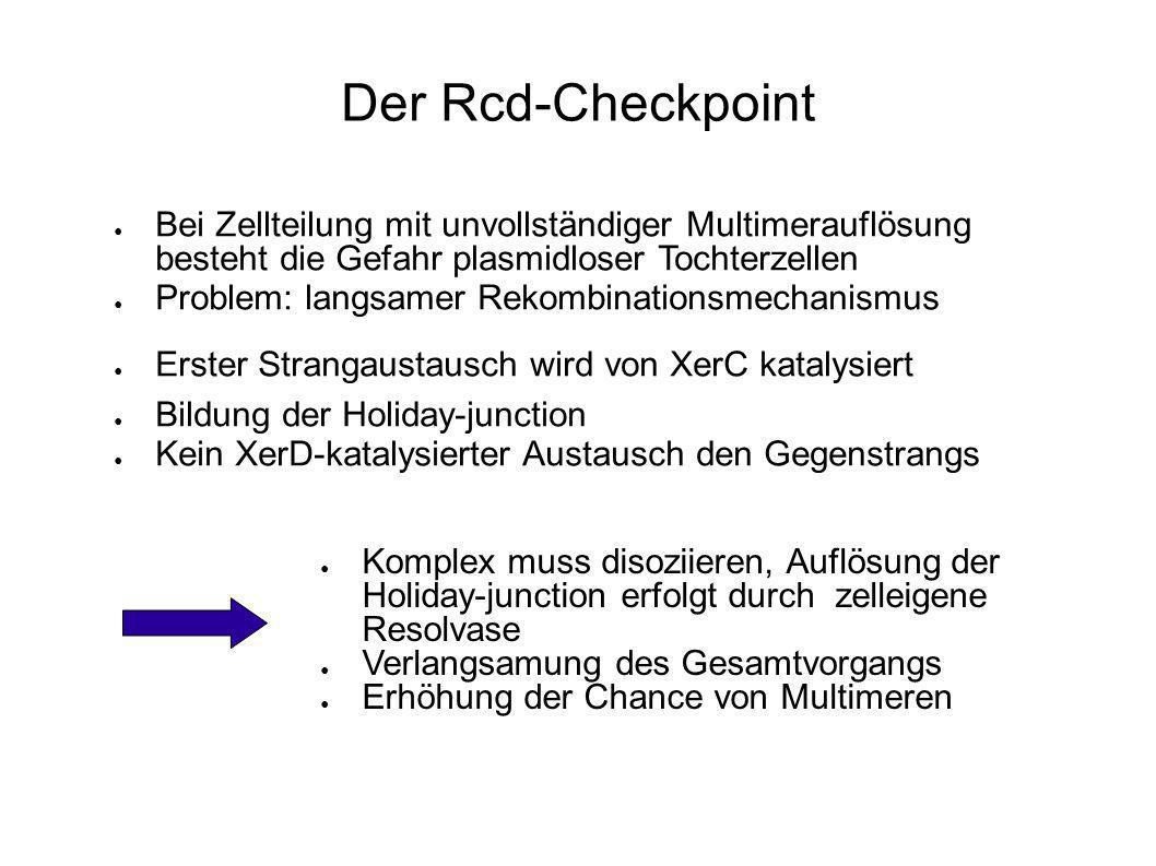 Der Rcd-Checkpoint Bei Zellteilung mit unvollständiger Multimerauflösung besteht die Gefahr plasmidloser Tochterzellen.