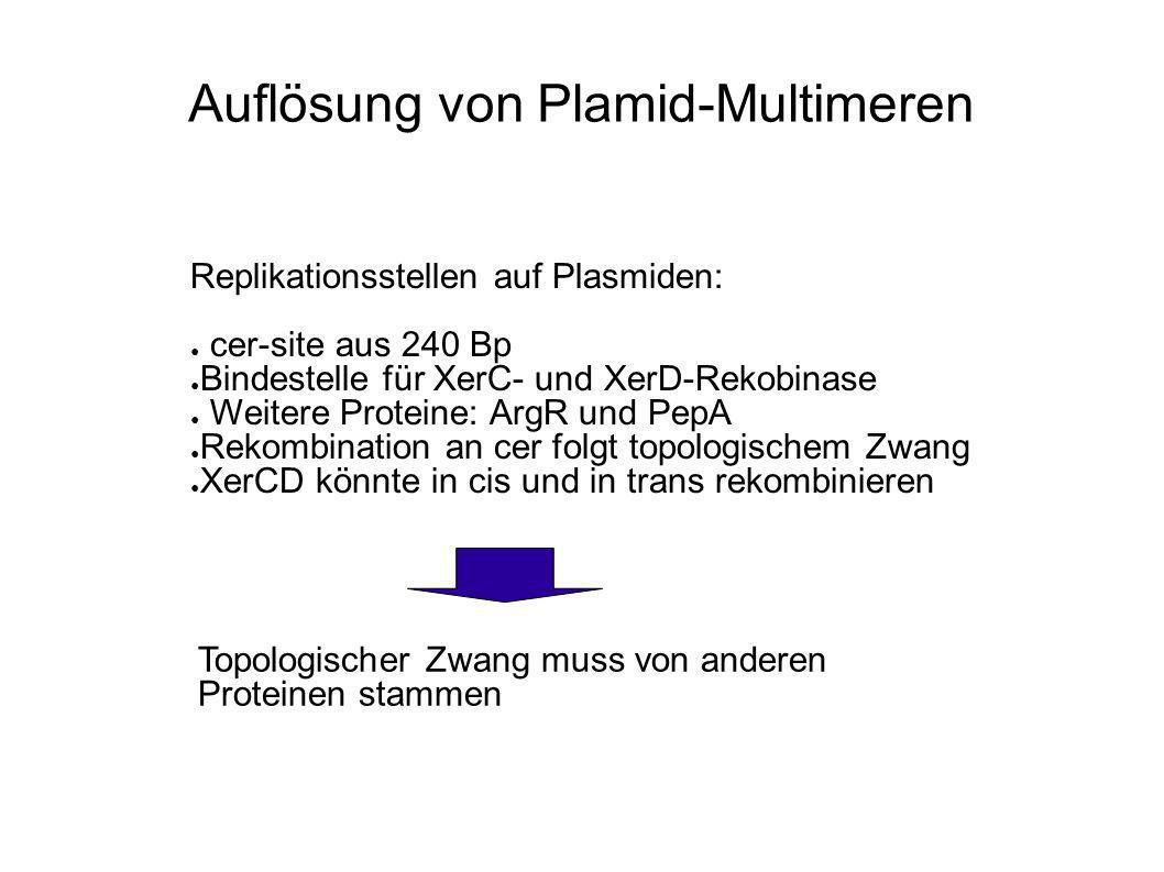 Auflösung von Plamid-Multimeren