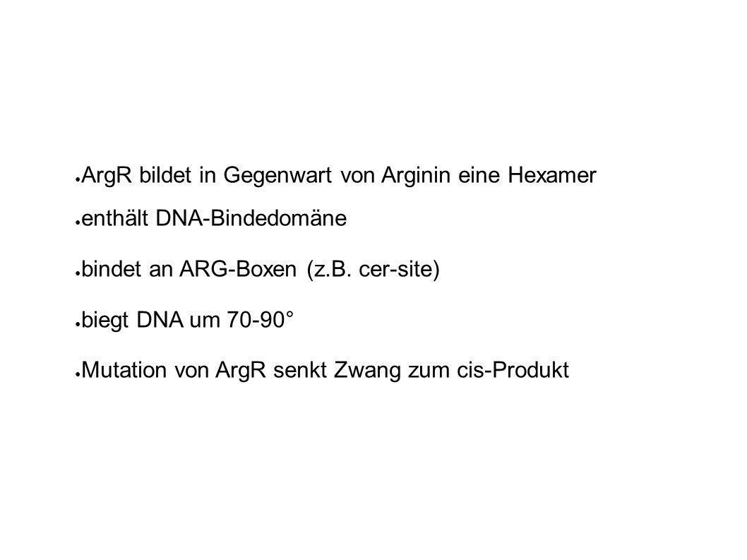 ArgR bildet in Gegenwart von Arginin eine Hexamer